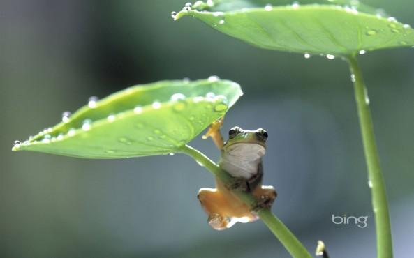 I Luv leaf hopping