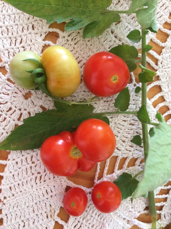 types of cherry tomatoes